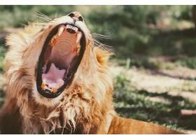 张嘴的雄狮