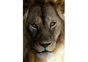 狮子王正面摄影
