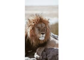 岩石上的狮子