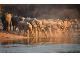 河边一群野象