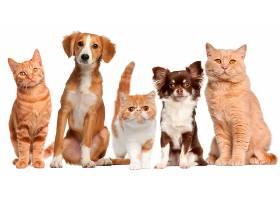 宠物猫与宠物狗