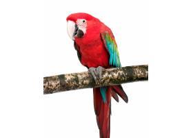 树枝上站立的鸟