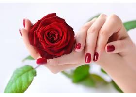 捧着玫瑰的女性手