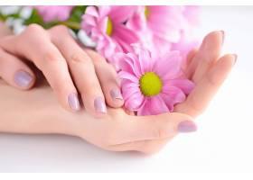 手心里的粉色菊花