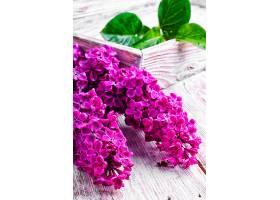 深紫色鲜花