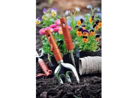 种植工具与花卉盆栽