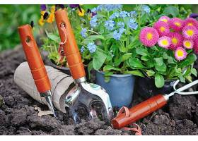 工具与草花
