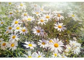 美丽的白花