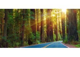 树林蓝色山路