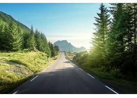 山路与树林