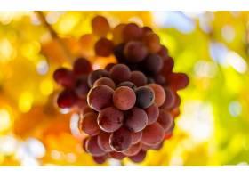 食物,葡萄,水果,壁纸(43)