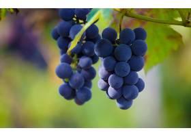 食物,葡萄,水果,壁纸(3)