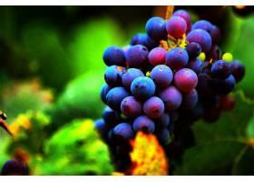 食物,葡萄,水果,壁纸(59)