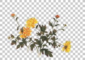 菊花菊花茶花艺设计花,菊花PNG剪贴画插花,食物,树枝,茶,电脑壁纸
