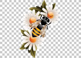 蜂蜜蜂蜂箱,蜜蜂PNG剪贴画食品,摄影,橙色,昆虫,电脑壁纸,花卉,水