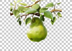 梨膳食补充剂B维生素食物,梨果子PNG clipart叶,柑橘,水果,封装Po