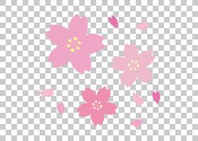 2017年国家樱花节日纸,樱花PNG剪贴画紫色,花,洋红色,樱桃,花瓣,
