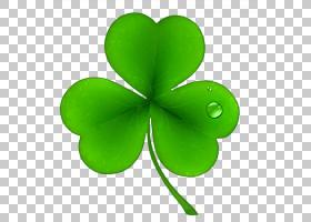 爱尔兰圣帕特里克节国家三叶草节日公共假日,圣帕特里克节三叶草
