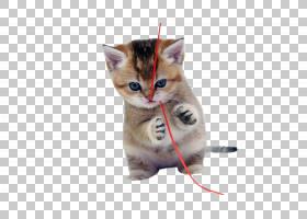 猫小猫狗可爱小狗,顽皮的小猫PNG剪贴画哺乳动物,猫像哺乳动物,动