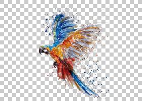 水彩绘画绘图,手彩色鹦鹉鸟飞溅,金刚鹦鹉绘画PNG剪贴画颜色飞溅,