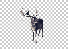 红鹿驼鹿绘图,手绘麋鹿角和鸟PNG剪贴画水彩画,鹿茸,哺乳动物,手,图片