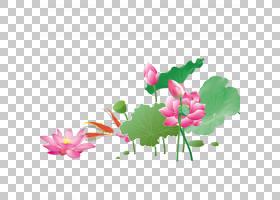 海报基金,鱼玩山楂PNG剪贴画插花,图像文件格式,动物,叶,科,电脑