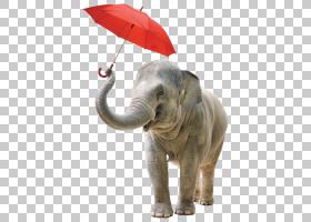 YouTube版税 - 股票摄影动物,youtube PNG剪贴画哺乳动物,野生动