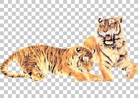 老虎,老虎PNG剪贴画哺乳动物,动物,猫像哺乳动物,食肉动物,摄影,