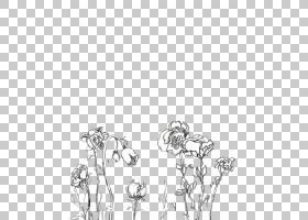 美学黑白摄影颜色,绘图花PNG剪贴画杂项,手,摄影,分支机构,其他,图片