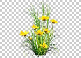 蒲公英花,黄色蒲公英PNG剪贴画插花,画,手,黄色花,草,植物茎,封装图片