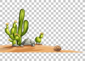 沙漠仙人掌科,彩绘沙漠仙人掌PNG剪贴画水彩画,绘画,摄影,手,石,