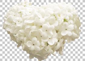欧几里德图标,心丁香PNG剪贴画白色,心,破碎的心,花,心矢量,封装