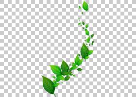 动态叶子,绿色叶子PNG剪贴画叶,枫叶,分支,植物茎,颜色,草,花,封图片