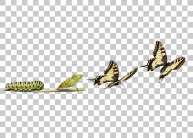 蝴蝶非常饥饿的毛虫昆虫变态,毛虫PNG clipart动物,生物学,羽毛,图片