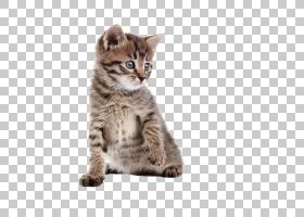 小猫龙李宠物狗动物,猫PNG剪贴画哺乳动物,猫像哺乳动物,动物,食