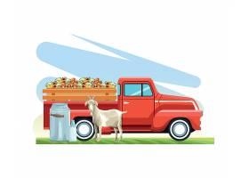 农场动物羊