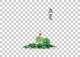 睡莲花背景立夏PNG素材