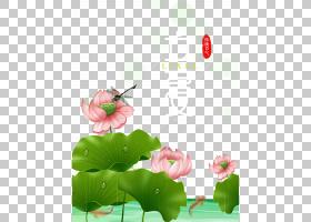 时尚卡通风雨季荷花蜻蜓背景立夏PNG素材