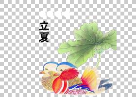时尚卡通荷花鸳鸯背景立夏PNG素材