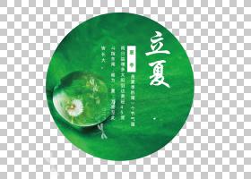 蒲公英水珠与荷叶背景立夏PNG素材图片
