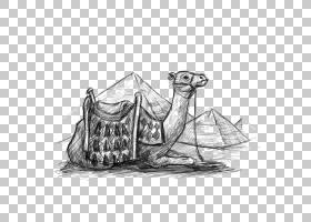 埃及金字塔骆驼沙漠绘图,沙漠骆驼PNG剪贴画动物,埃及,卡通骆驼,