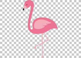 火烈鸟鸟欧几里德,红色火烈鸟,粉红色的火烈鸟PNG剪贴画脊椎动物,