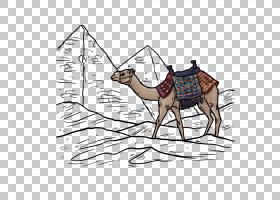 骆驼沙漠欧几里德,骆驼PNG剪贴画哺乳动物,动物,脊椎动物,卡通骆