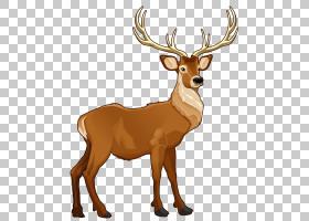 鲁道夫圣诞老人的驯鹿,布朗驯鹿,棕色鹿卡通PNG剪贴画鹿茸,哺乳动