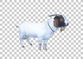 绵羊山羊牲畜,山羊PNG剪贴画动物,牛山羊家庭,鼻子,封装PostScrip