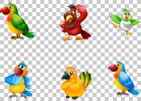 鸟欧几里德,卡通鹦鹉PNG剪贴画卡通人物,动物,卡通武器,摄影,长尾