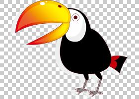 鸟猫头鹰卡通绘图,乌鸦PNG剪贴画动物,摄影,生日快乐矢量图像,动