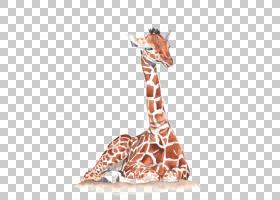 长颈鹿水彩画,手绘长颈鹿PNG剪贴画哺乳动物,动物,手绘,野生动物,