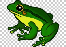 青蛙,两栖动物文件PNG剪贴画动物,脊椎动物,卡通,树蛙,蟾蜍,蝌蚪,