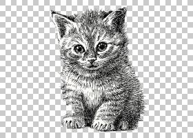 猫小猫线条艺术,手绘卡通猫简单笔PNG剪贴画水彩画,哺乳动物,画,